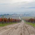 Montefalco Il Viale in una giornata d'autunno